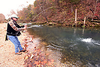 NWA Democrat-Gazette/FLIP PUTTHOFF <br /> Roaring River State Park near Cassville, Mo. offers superb trout fishing on a wild spring-fed stream. The park has a catch and keep season March 1-Oct. 31. Catch and release season runs from mid November through mid February four days each week. An angler battles a trout during catch and release season.