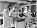 College butchery demonstration by three butchers in white coats using an axe to dismember a pig male students watching, Helsinki, Finland 1950s