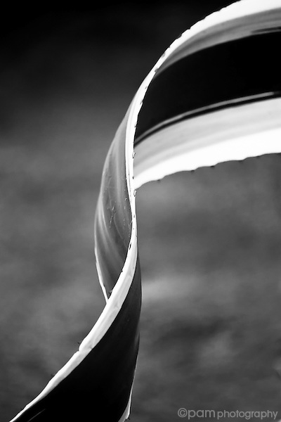 Black and white abstract of the curve of a plant leaf