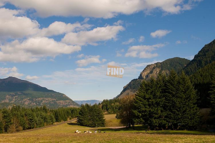 Farmland Near Cascade Locks, Columbia River Gorge, Oregon