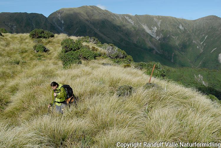 Jente går i høyt gras ---- Girl walking in grass