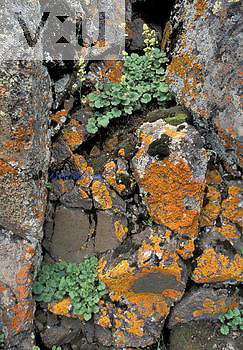 Flowering and non-flowering plants; rock lichens, mosses, and flowers.