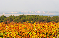 Chateau Mire l'Etang. La Clape. Languedoc. France. Europe. Vineyard.