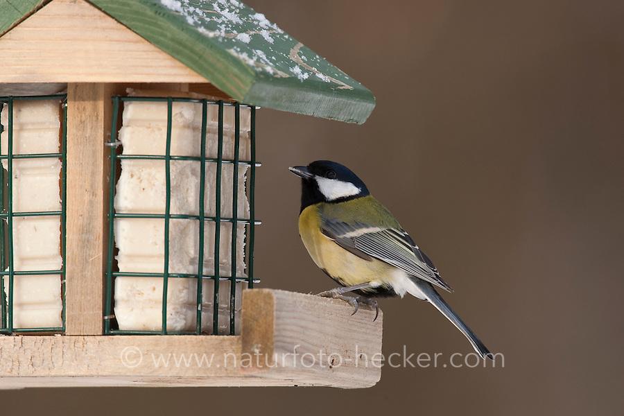 Kohlmeise, an der Vogelfütterung, Fütterung im Winter bei Schnee, an Häuschen mit Fettfutter, Energiekuchen, Winterfütterung, Kohl-Meise, Meise, Parus major, great tit