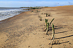 Wooden posts exposed by beach depletion, Hollesley Bay, from Bawdsey, Suffolk, England, UK