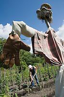 Europe/France/Aquitaine/40/Landes/ Lencouacq:  Violette Valés - agricultrice et restauratrice cultive  ses  fleurs comestibles, herbes aromatiques et légumes oubliés  dans  Jardin Potager de la Ferme Auberge du Jardin de Violette