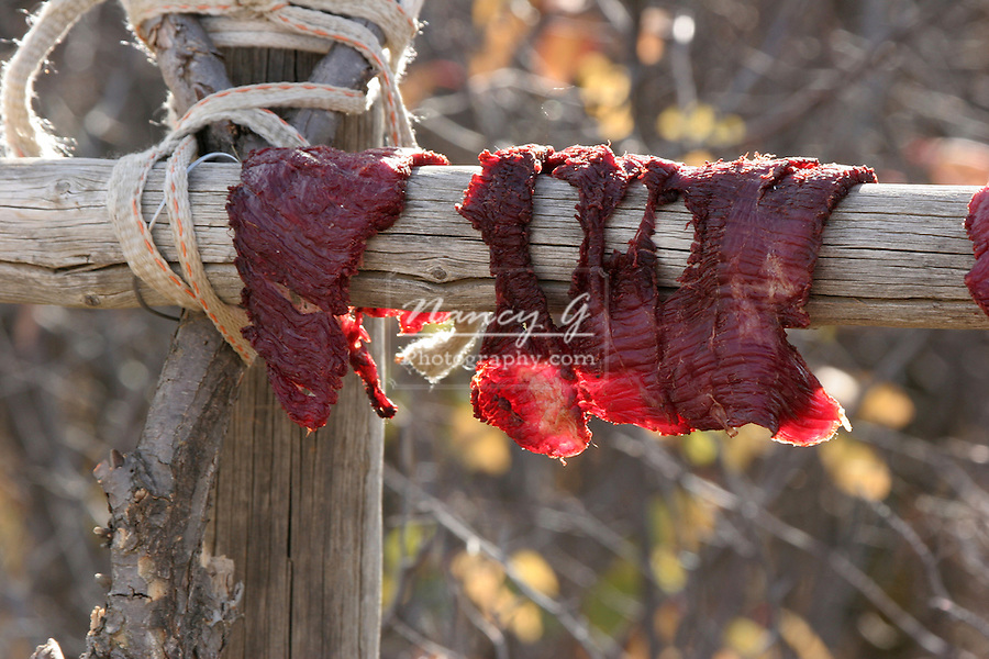 Freshly cut Buffalo meat drying in the sun to become jerky.  This is a typical necessary food supply of the Plains Indians of South Dakota.