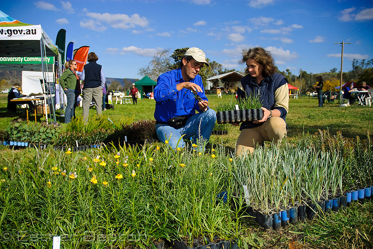 Vice Chairman of Holbrook Land Care Noel Passalaqua and Jo Dyke office assistant for Holbrook Land Care. He is also owner of Jayfields Nursery and is selling native plants for revegetation. Punnets of native Sticky Everlasting Daisies (Bracteantha sp), with butterflies,  on sale at Slopes to Summit Farm & Environment Open Day, Annandayle South station, Woomargama, New South Wales, Australia
