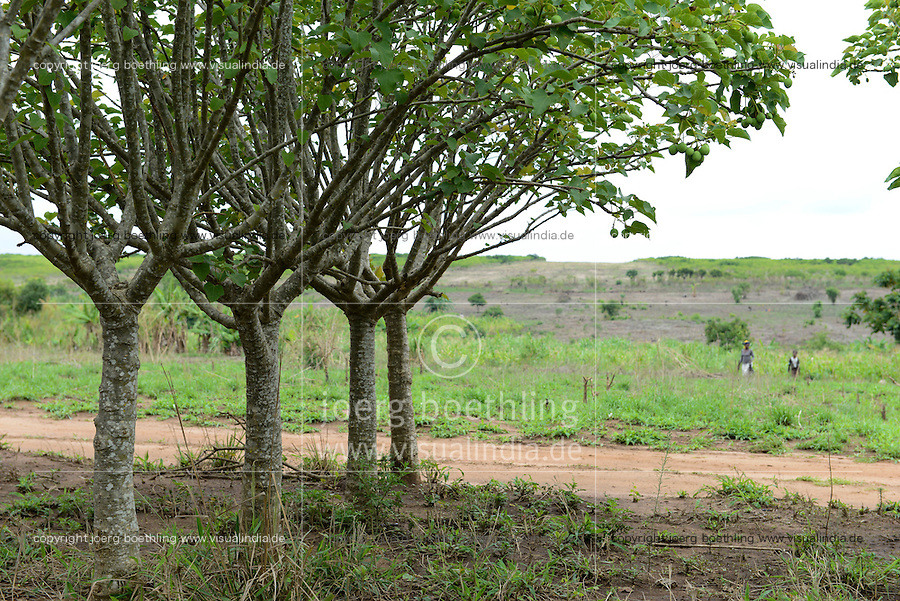 MOZAMBIQUE, Chimoio, BAGC Beira agricultural growth corridor, failed and abandoned 2000 hectare Jatropha farm of Sun Biofuels Mozambique SA which was planted as biofuel project in 2010 at old portuguese tobacco farm, the plan was to reach 10.000 hectares in 2015  / MOSAMBIK, Chimoio, BAGC Beira agricultural growth corridor, gescheiterte und aufgegebene 2000 Hektar Jatropha Farm of Sun Biofuels Mozambique SA, die 2010 als Biosprit Projekt auf einer alten Tabakplantage gepflanzt wurde, laut Planung sollte die Pflanzung 2015 auf 10.000 Hektar ausdehnt werden, das Oel der Jatropha Nuesse wurde über die finnische Firma Neste Oil fuer einen Lufthansa Biosprit Versuchsprojekt verwendet