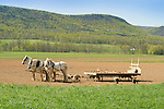 Nippenose Valley. Stolfus family amish children collecting stone from field in spring.