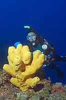 Diver (MR) and Branching Tube Sponge (Pseudoceratina crassa) on Cayman Bra