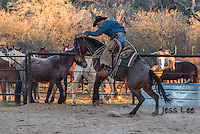 Bucking horse with Arizona Cowboy. Arizona Cowboys