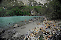 Driftwood washed up on the river Inn. Roppen area, Imst district, Tyrol, Tirol, Alps Austria.