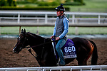 October 27, 2019 : Breeders' Cup Dirt Mile entrant Omaha Beach, trained by Richard E. Mandella, exercises in preparation for the Breeders' Cup World Championships at Santa Anita Park in Arcadia, California on October 27, 2019. Scott Serio/Eclipse Sportswire/Breeders' Cup/CSM