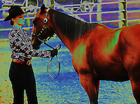 A young woman in a plaid shirt and cowboy hat performs with her horse at a horse show. Photo illustration.