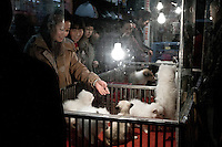 Clients in a petshop open at night in Nanjing. Last years the new chinese middle class became mad of dogs and domestic pets. Its often seen as a sign of wealthness. Buyers must pay a high tax in order to get the right to possess a animal inside cities.