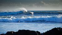 January Surfers