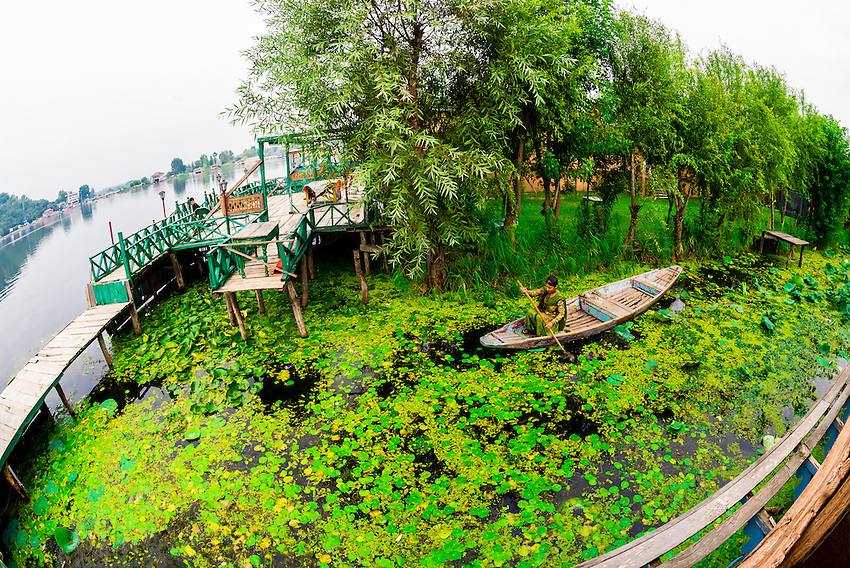Dal Lake, Srinagar, Kashmir, Jammu and Kashmir State, India