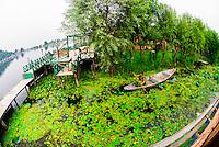 Dal Lake, Srinagar, Kashmir, Jammu and Kashmir State, India