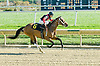 Lumber Queen winning at Delaware Park on 11/1/10