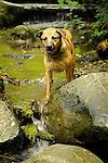 Rowland, mixed breed dog. Lakeridge Park outing. Dead Horse Canyon, Seattle, WA.