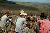 Pernambuco State, Brazil. Sugar cane workers taking a break sitting down looking over hills covered with sugar cane.