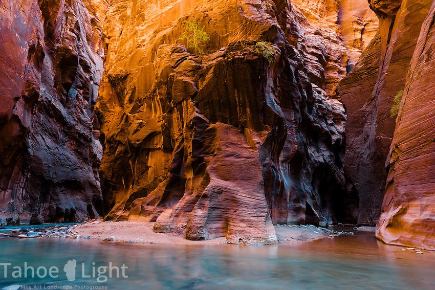 Zion Narrows water hike along Virgin River