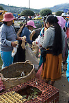 "The Saturday market in Otavalo is the largest in Ecuador. Otavalo is situated in a beautiful valley between the Imbabura volcano (4,609 m) and Mount Cotacachi (4,939 m). Very early in the morning the people of the surrounding mountains come to the city market with their ware. From 5 pm there is a livestock market where cattle, pigs, poultry and small animals like rabbits and guinea pigs are sold. The guinea pig market is the longest lasting market. Women with baskets and boxes with guinea pigs try to sell their wares. Guinea pigs are inspected, particularly by their size and gender, not by their ""pettability"". Guinea pigs (cuyes in Spanish) is in this part of Ecuador a delicacy, eaten with rice, potato and vegetables. For a good healthy guinea pig eagerly 4-8 dollar is paid. Usually they are bought for breeding. The selling starts around 5 am and lasts until 4 in the afternoon. Then the cows and pigs have long gone home. At midday the market gradually eliminates. The guinea pigs, hens and chickens are the latest to leave in bags with a new owner off the market."