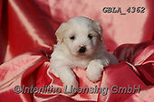 Bob, ANIMALS, REALISTISCHE TIERE, ANIMALES REALISTICOS, dogs, photos+++++,GBLA4362,#a#, EVERYDAY