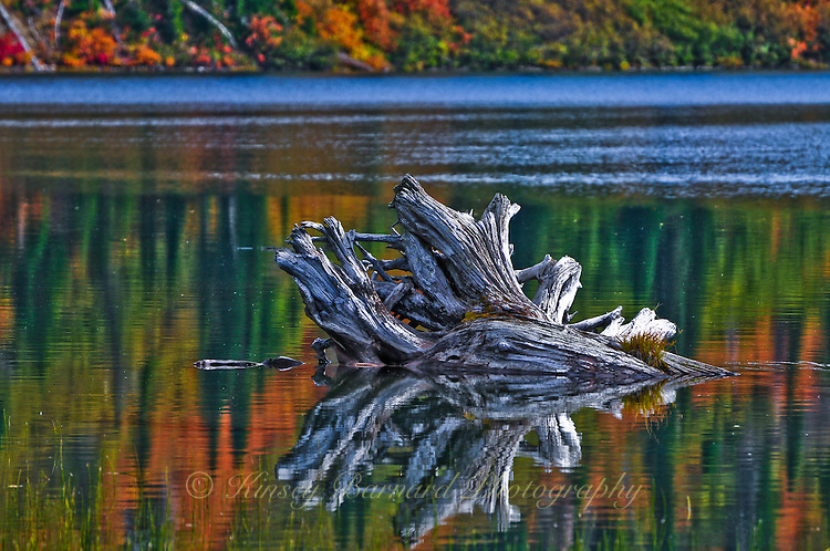 Fall colors and a giant piece of driftwood reflected in the peaceful waters of Clayton Lake, Montana
