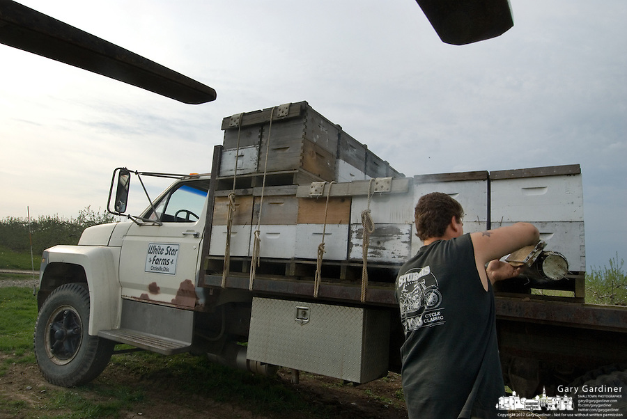 Jason Comacho smokes bee hives being delivered by Joe Blair to Lynds Fruit Farm near Pataskala, Ohio, Monday, April 30, 2007. Blair, the largest bee supplier in Ohio, lost more than 1,100 hives over the winter to colony collapse disorder. Added to his business woes is a cold spring that damaged many orchards that no longer need as many bees. Blair delivered 48 hives to Lynds which normally needs 200.