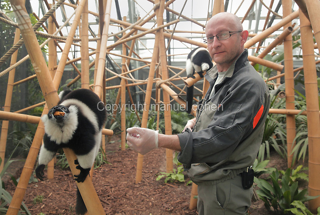 Jean Yves Lavaud, soigneur animalier, dans la loge du Lemur Vari a ceinture blanche (Varecia variegata subcincta), au moment du repas, zone Madagascar, Grande serre, new Parc Zoologique de Paris, or Zoo de Vincennes, (Zoological Gardens of Paris, also known as Vincennes Zoo), Museum National d'Histoire Naturelle (National Museum of Natural History), 12th arrondissement, Paris, France. Picture by Manuel Cohen