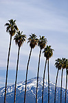Palm trees and desert mountains with snow