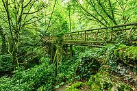 France, Loir-et-Cher (41), Chaumont-sur-Loire, domaine de Chaumont-sur-Loire et festival international des jardins 2019, thème, Jardins de Paradis, pont en rocaille au dessus du vallon des brumes