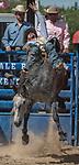 Bareback rider Lucas Samaniego from Riverside, California at the 68th annual Oakdale Saddle Club Rodeo on Sunday, April 14, 2019.  (Al Golub/Record Photo)