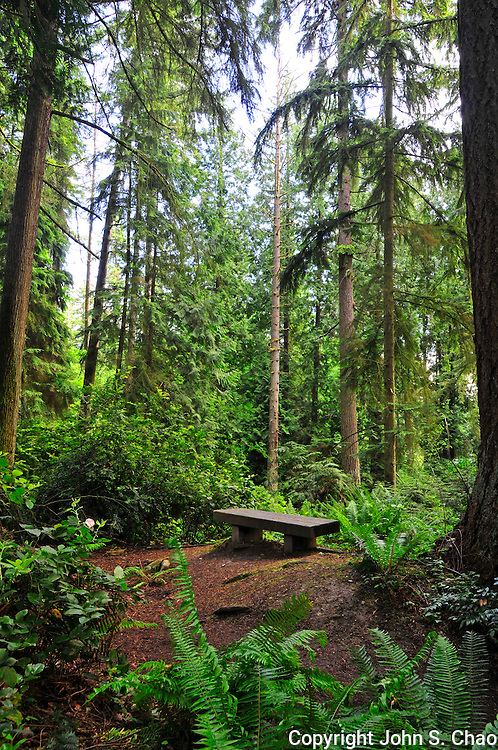Bench in Bellevue, Washington's wooded Weowna Park. Vertical version.