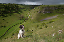 20/05/15<br /> <br /> Seven-month old, springer spaniel, Chester, takes in the view.<br /> <br /> After days of sunshine and showers the landscape at  Lathkill Dale in the Derbyshire Peak District has turned into a stunning show of green as grasses and trees truly show that this country is a green and pleasant land.<br /> <br /> <br /> All Rights Reserved: F Stop Press Ltd. +44(0)1335 418629   www.fstoppress.com.