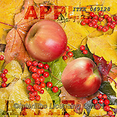 Isabella, STILL LIFE STILLEBEN, NATURALEZA MORTA, paintings+++++,ITKE049128,#i#, EVERYDAY,apples,autumn