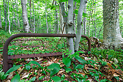 Beech trees growing around a rusted bed frame near Mount Blue in Kinsman Notch in the White Mountains, New Hampshire. This bed frame is possibly from an old logging camp of the Gordon Pond Railroad, which was a logging railroad in operation from 1907 - 1916 (+/-).