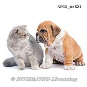 Xavier, ANIMALS, REALISTISCHE TIERE, ANIMALES REALISTICOS, FONDLESS, photos+++++,SPCHWS621,#A#
