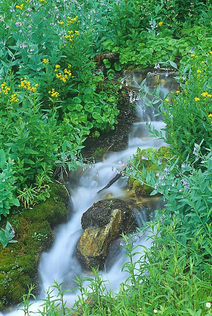 Wildflowers, Creek, Grand Teton National Park, Wyoming