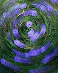 A motion blur of violet flowers