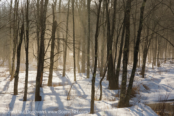 Early morning fog in a New Hampshire forest on a warm winter day