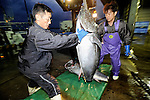 """Fishermen unload a 100-kg Pacific bluefun tuna from a boat at Oma Port,  northern Japan on 23 September 2008. Oma, a town that has long been synonymous with high-quality tuna in Japan, is having to come to grips with depleting stocks of tuna in nearby waters and a battle that pits """"ippon-zuri"""", or single-line, fishermen against long-line fishing fleets in the area."""