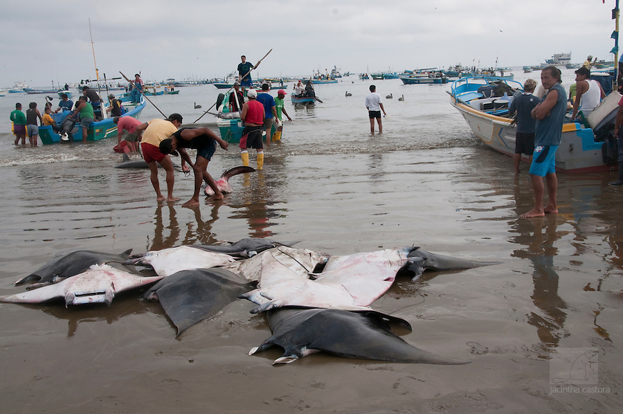 rays on the fish market of puerto lopez ecuador