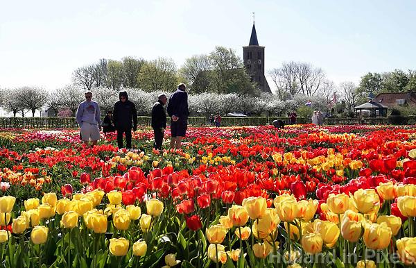 Nederland Limmen 2018.  Niet alleen in Keukenhof zijn bijzondere tulpen te zien. In Noord-Holland ligt de Hortus Bulborum. In de tuin staan meer dan 4000 soorten bloemen. De hortus, waarin voornamelijk tulpen en narcissen staan, is in 1928 opgericht. De Hortus Bulborum is een proeftuin, waar nieuwe soorten worden gekweekt. Op de achtergrond de Protestantse ( Hervormde ) kerk van Limmen.   Foto Berlinda van Dam / Hollandse Hoogte
