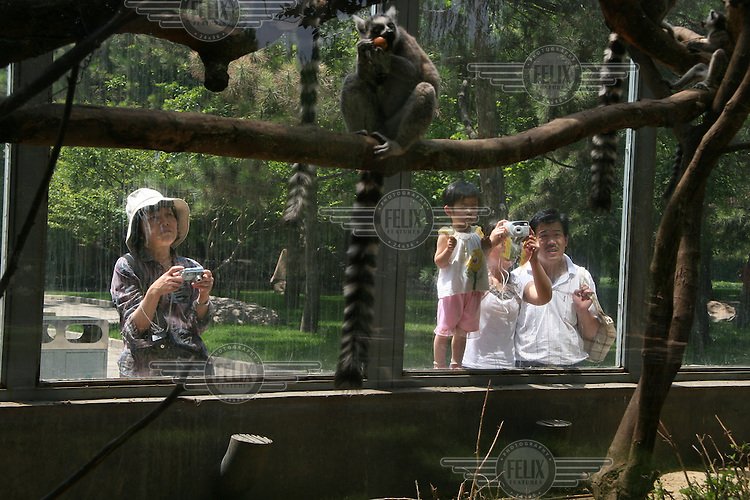 Tourists take photographs of lemurs at a zoo in Beijing.
