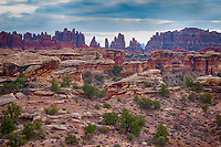 March 14, 2018: Juniper and pinyon pines dot the canyon floors of The Needles District, Canyonlands National Park, Utah.