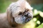 Quinn's Dog