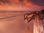 Dramatic sunset nature scenery of driftwood on a shore of lake Huron. Pinery Provincial Park, Ontario, Canada.